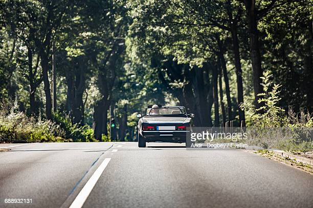 Car On Road Along Trees