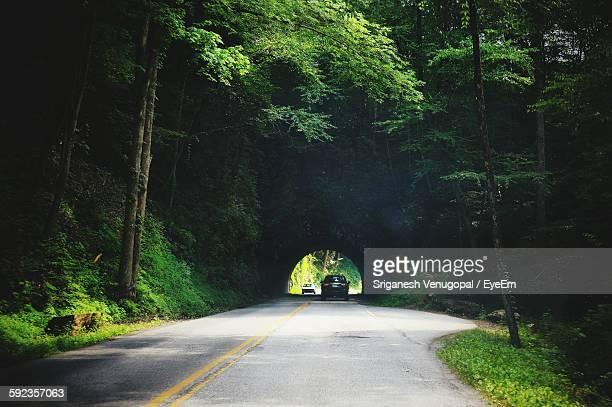 Car On Road Amidst Trees At Great Smoky Mountains National Park