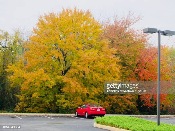 Car On Road By Trees During Autumn