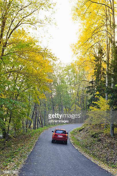 Car on road covered in autumn forest