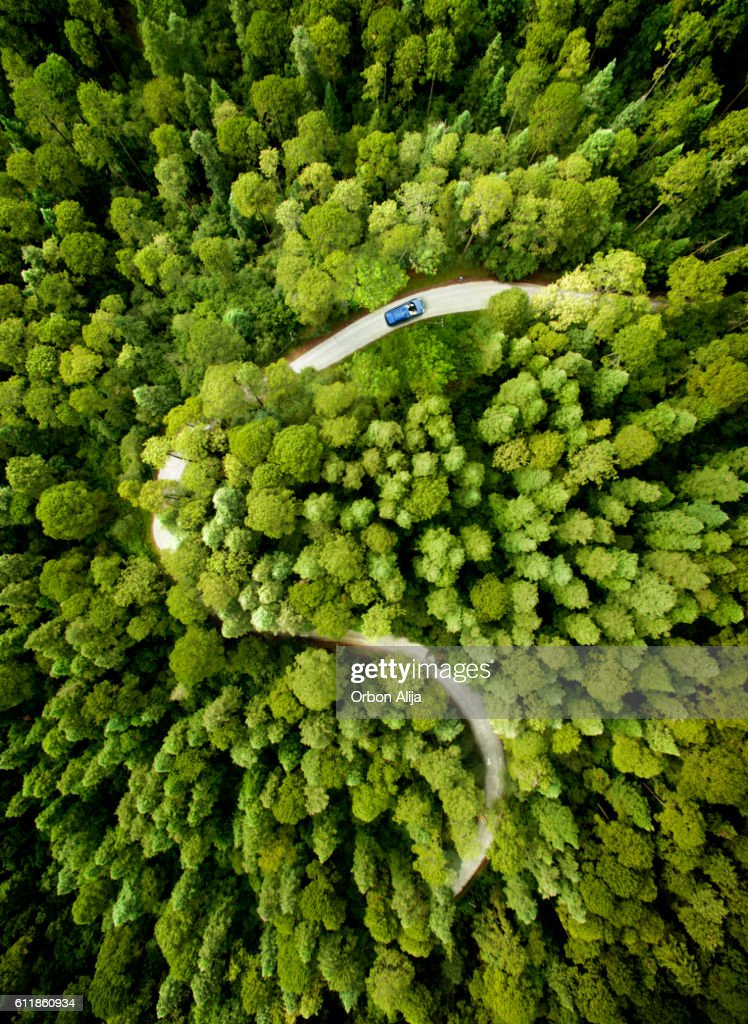 Car on road through a pine forest : Stock Photo