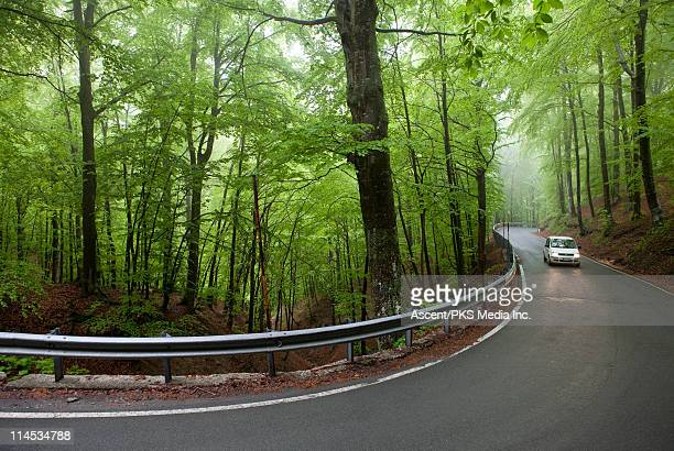 Car on winding road through newly green forest