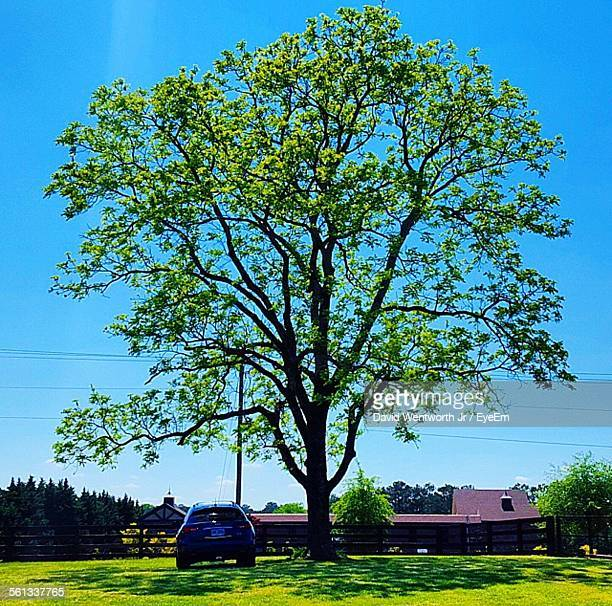 Car Parked Under Tree Against Clear Blue Sky