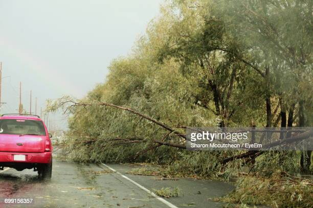 car passing by fallen tree on road - fallen tree stock pictures, royalty-free photos & images