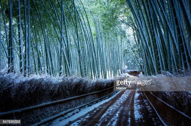 Car passing through the snowy bamboo grove