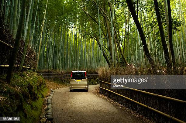 A car running through the bamboo grove