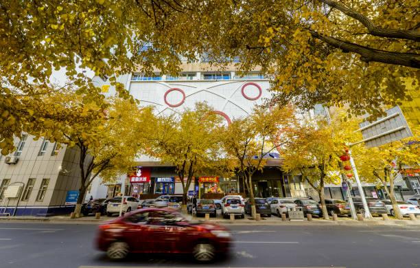 CHN: Golden Autumn In China