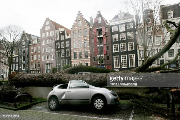 Car Smashed by Fallen Trees in Amsterdam