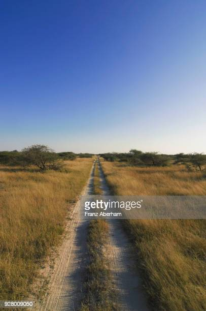 car tracks through savuti depression, chobe national park, botswana - franz aberham foto e immagini stock