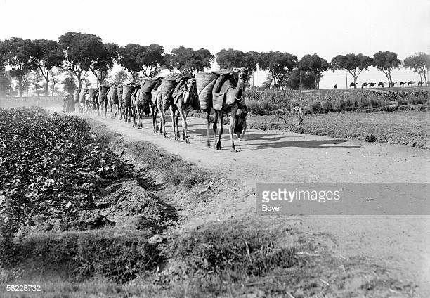 Caravan carrying ground from the hills of rubble for the cultivation of cotton Egypt