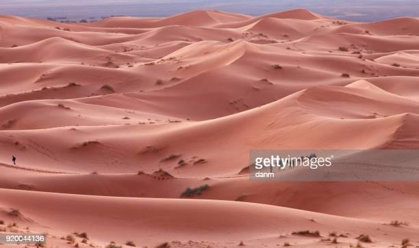 Caravan in Sahara desert Morocco