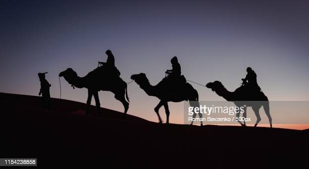 caravan in sahara - camel train stock pictures, royalty-free photos & images