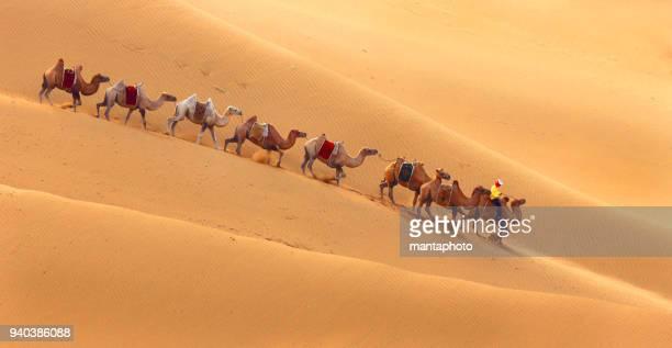 Caravan in de woestijn