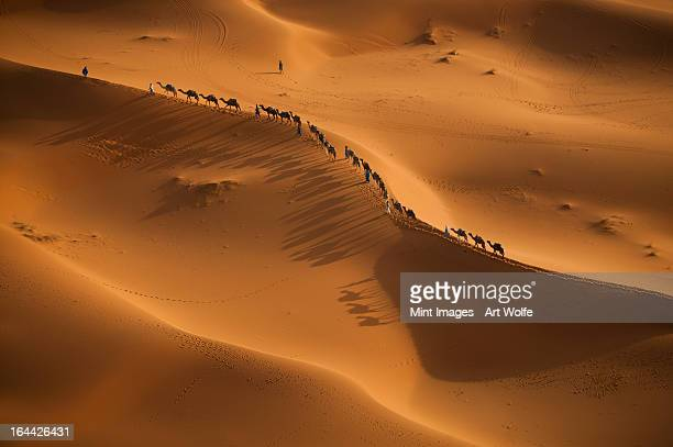 a caravan of camel merchants, rider and camels in a line, on the sahara desert sands. - camel train stock pictures, royalty-free photos & images