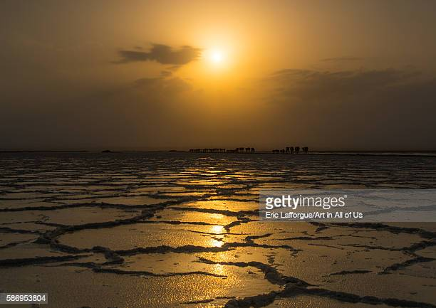 Caravan of camels at sunset on a salt lake afar region dallol Ethiopia on February 25 2016 in Dallol Ethiopia