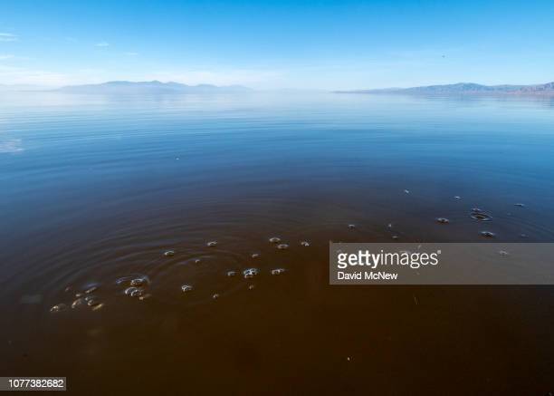 Carbon dioxide bubbles escape from underground offshore at the Salton Sea on January 1 2019 near Calipatria California United States Scientists...