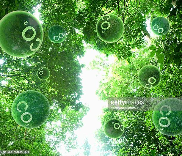 carbon dioxide molecules floating through trees (digital composite) - photosynthesis stock photos and pictures