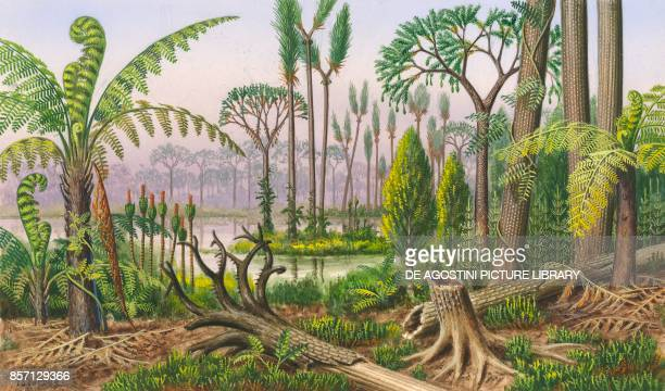 Tree ferns and climbing fern, Stiglocalamites schultz, Sigillaria root , scale tree , Sigillaria, Calamites, Lepidodendron sternbergi, drawing.