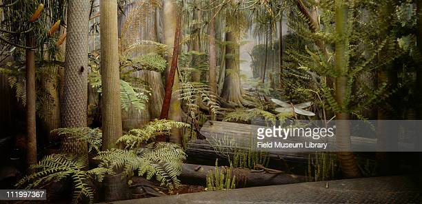 Carboniferous Forest Diorama or Coal Forest Diorama old version displayed from 19291991 1991