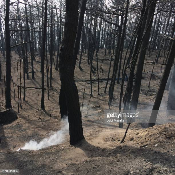 carbonized forest the day after the fire - snag tree stock pictures, royalty-free photos & images