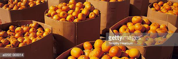 cardboard crates of pumpkins - timothy hearsum stock pictures, royalty-free photos & images