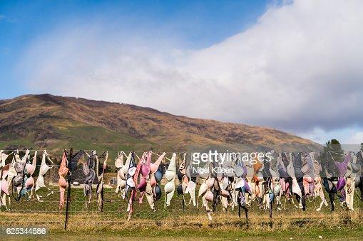 Cardrona Bra Fence, New Zealand