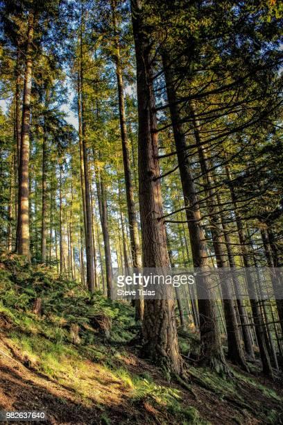 Cardrona Forest, Cardrona, Peeblesshire, Scotland