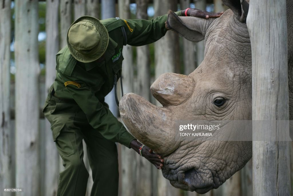 Last Northern White Rhino Dies in Kenya