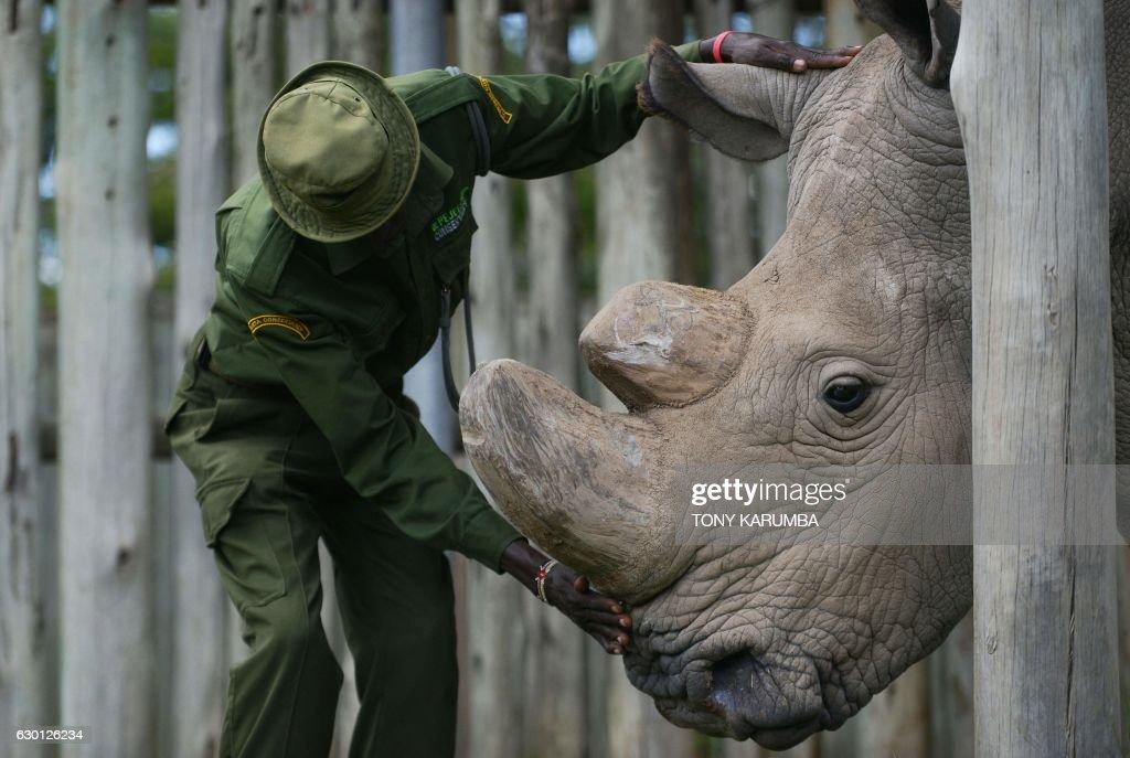 Last Northern White Rhino Dies in Kenya