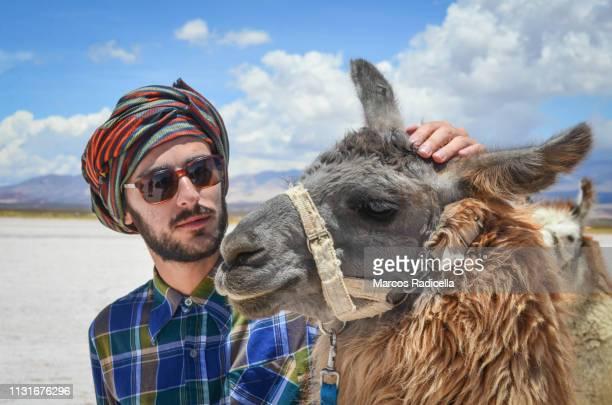 caressing a llama in salta province, puna desert, argentina - radicella photos et images de collection