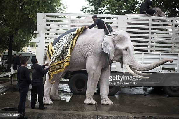 A caretaker dresses his elephant at the Ministry of Defense before a parade to honour King Bhumibol Adulyadej on November 8 2016 in Bangkok Thailand...