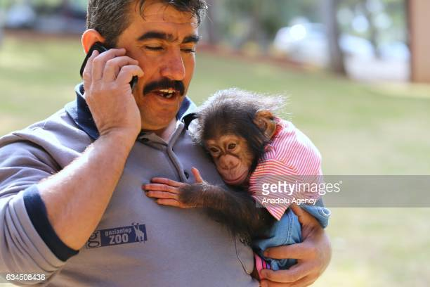 A caretaker of Gaziantep Zoo Nedim Aslan holds the newborn baby chimpanzee named 'Can' in his arm as its mom refused to have him at Gaziantep Zoo in...