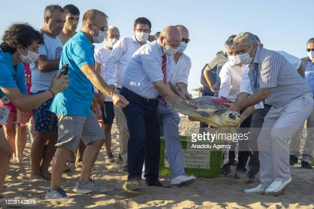"""Caretta carettas named """"Kadriye"""" and """"Belek"""" which were treated in Antalya province, are released back into the sea with satellite tracking devices..."""