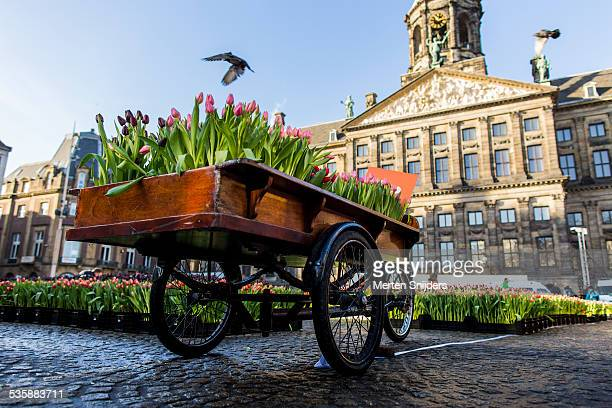 Cargo bike packed with tulip flowers on Dam squre