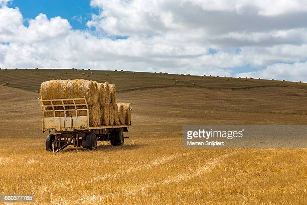 cargo car loaded with hayroles in field - オーバーバーグ郡 ストックフォトと画像