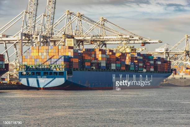 """cargo container ship hyundai speed with shipping containers docked at the container terminal - """"sjoerd van der wal"""" or """"sjo"""" stock pictures, royalty-free photos & images"""