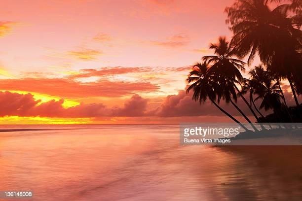 caribbean, barbados, pristine beach - bridgetown barbados stock pictures, royalty-free photos & images
