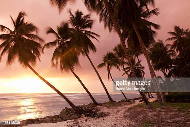 Caribbean, Barbados, pristine beach