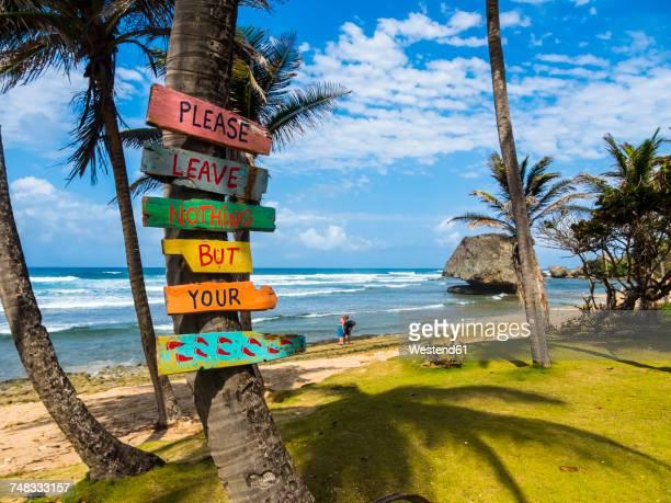 caribbean, barbados, saint joseph, signs on palm at bathsheba park - barbados stock pictures, royalty-free photos & images