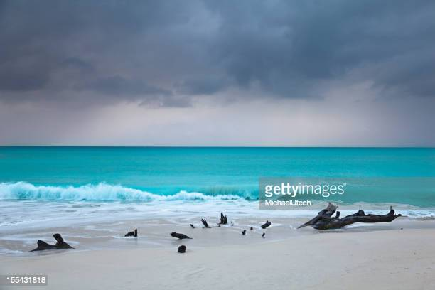 Caribbean Beach Driftwood With Dramatic Sky
