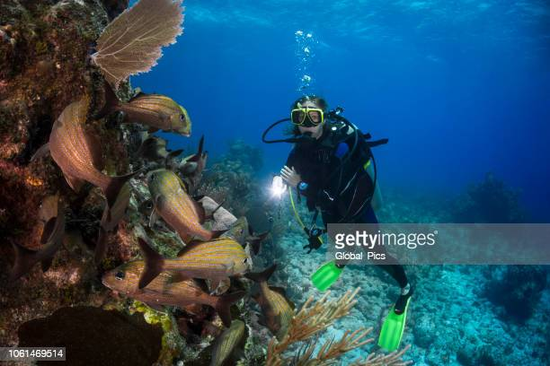 カリブ海サンゴ礁とダイバー - スキューバダイビング ストックフォトと画像