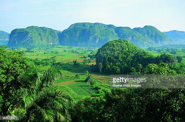 caribbean countryside - pinar del rio stock photos and pictures
