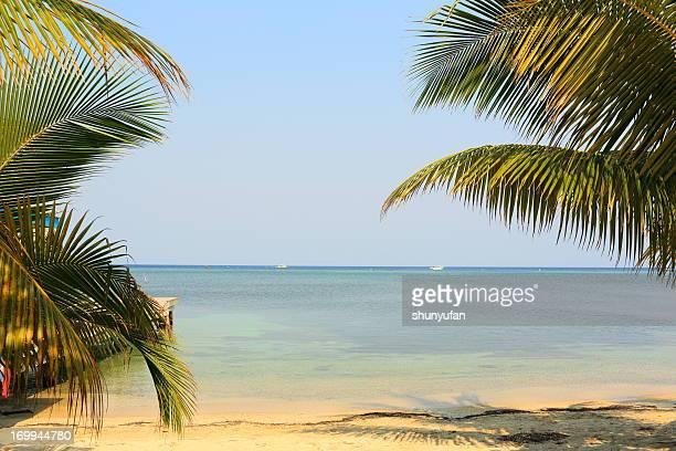 caribe: playa de ensueño - paisajes de isla de  granada fotografías e imágenes de stock