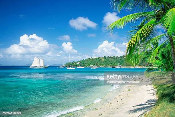 Caribbean, Grenadines, Britannia Bay, Mustique, View of a beach
