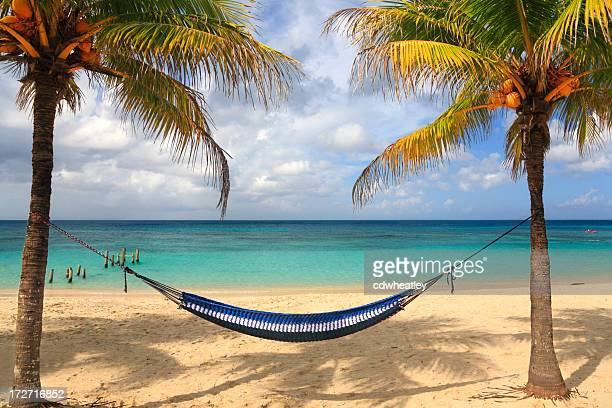 Caribbean hammock and palms