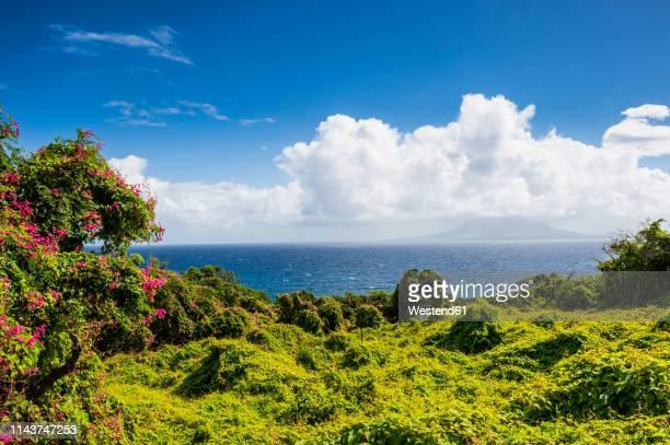 caribbean, netherland antilles, st. eustatius, lush vegetation - シント・ユースタティウス島 ストックフォトと画像