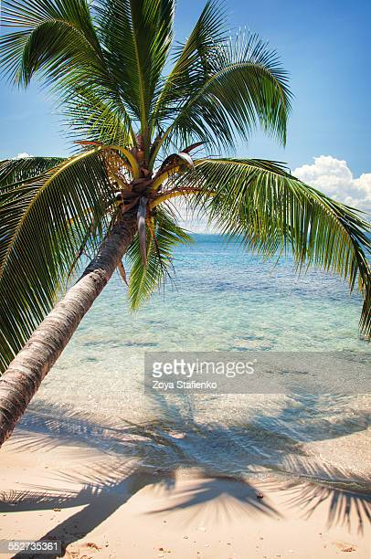 Caribbean palm tree and its shadow over water