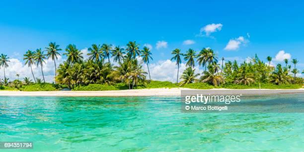 caribbean sea and tropical beach. - paisajes de republica dominicana fotografías e imágenes de stock