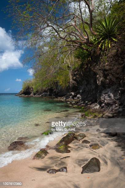 caribbean sea and tropical plants, anse dufour, martinique - french overseas territory stock pictures, royalty-free photos & images