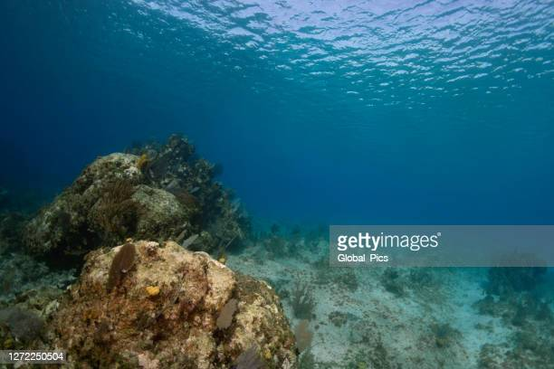 caribbean sea - at the bottom of stock pictures, royalty-free photos & images